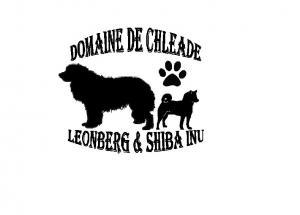 Domainede chleade elevage familiale de leonberg et shiba inu